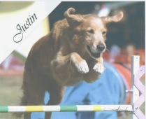 Justin -- Susan Schultz -- Justin, a Golden Retriever, was my best friend for 9 years and a Canine Good Citizen. He did agility because I asked him to do it and he earned his Performance I title in USDAA. I will remember him best for his love of retrieving his fake dead duck at the lake and one time a real recently dead coot duck!