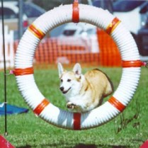 Lexis -- CH RiversideKool Gal O-Tallyten MX, MXJ 1994 - 2004 --Debbie Mosher: My first CH Corgi, my first agility dog. You and I went through a lot together, and you taught me so much. I'll always miss you my sweet, sweet girl!